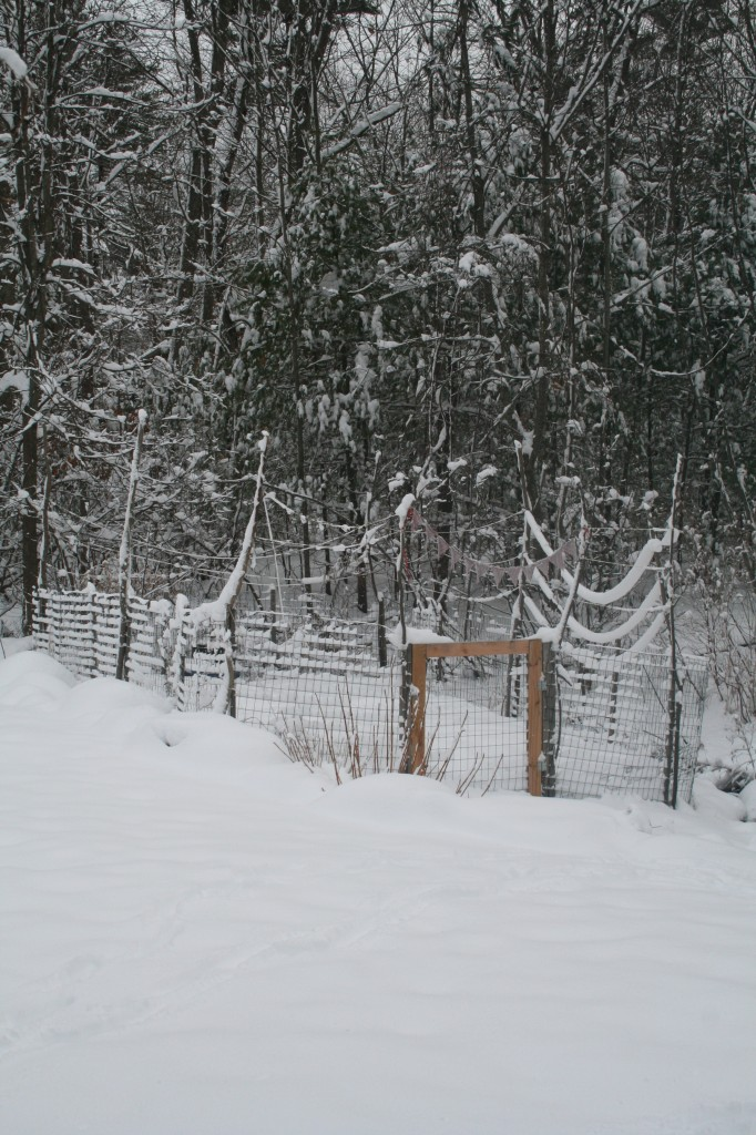 snow garden 002