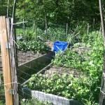 Garden May 27