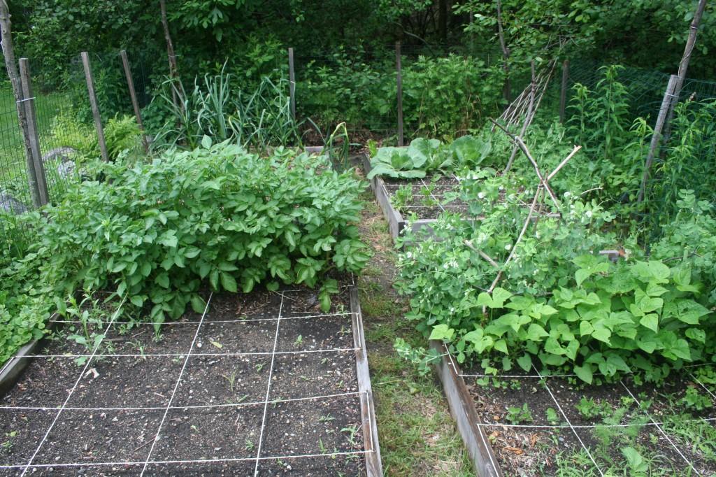 garden 027