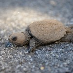 More Turtle Pictures