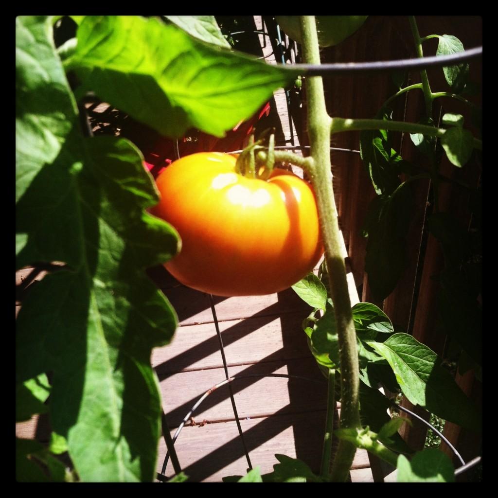 garden 9.11 4
