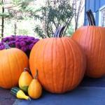 More Pumpkin!