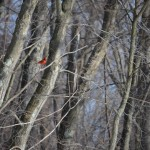 Cardinal Update