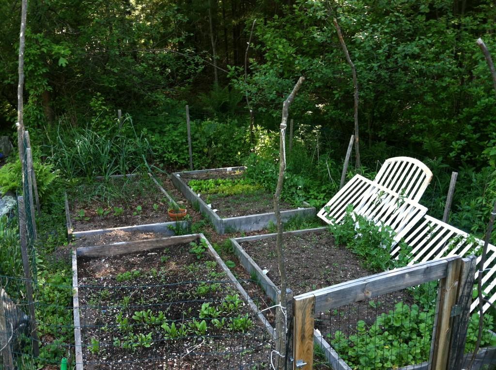 garden6.3