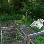 Garden Update: Sarah June 3
