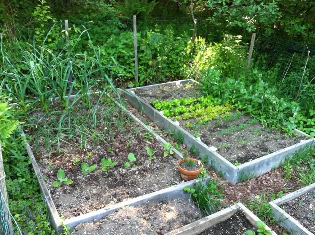 garden6.3c