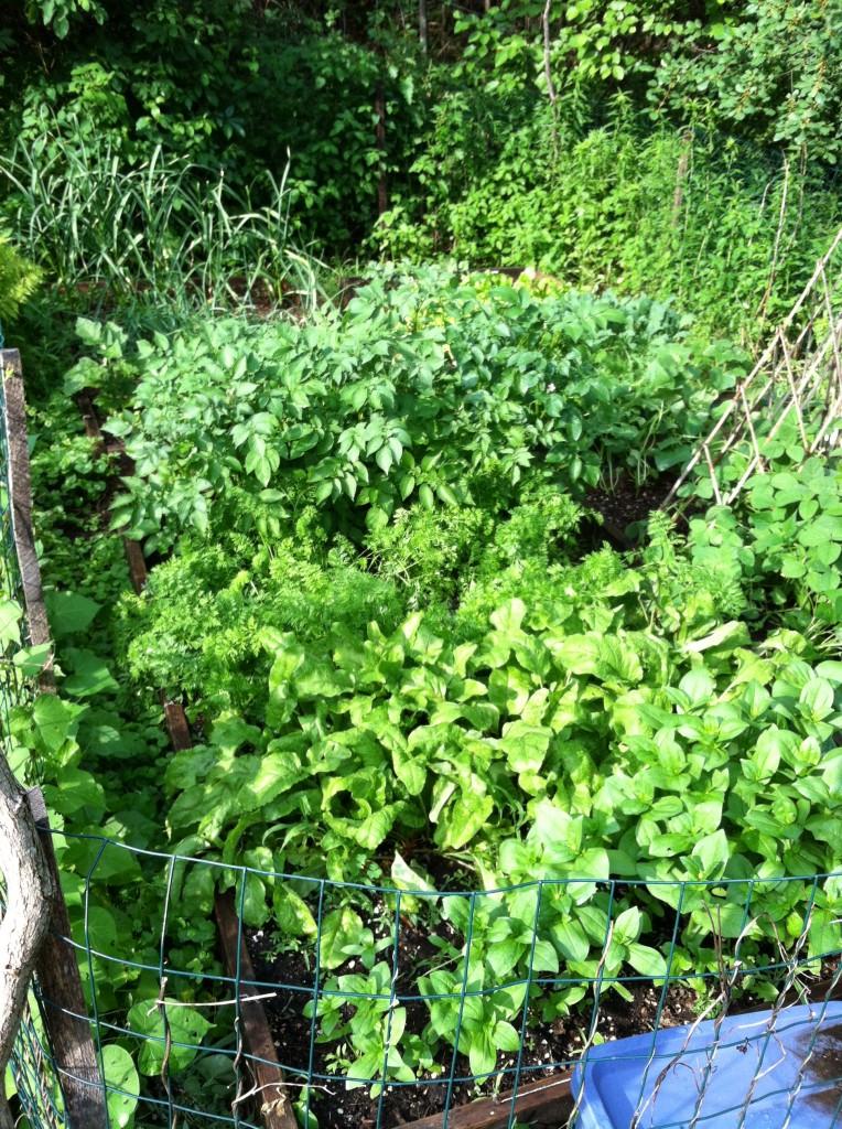 garden6.30