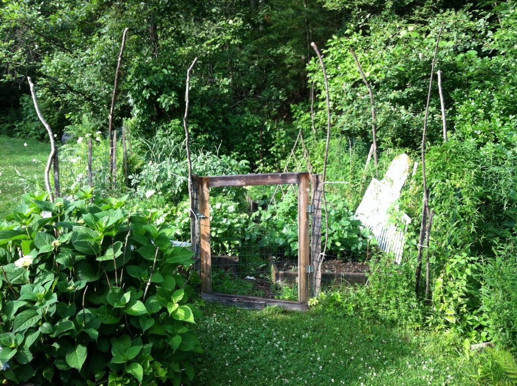 garden6.30.2JPG