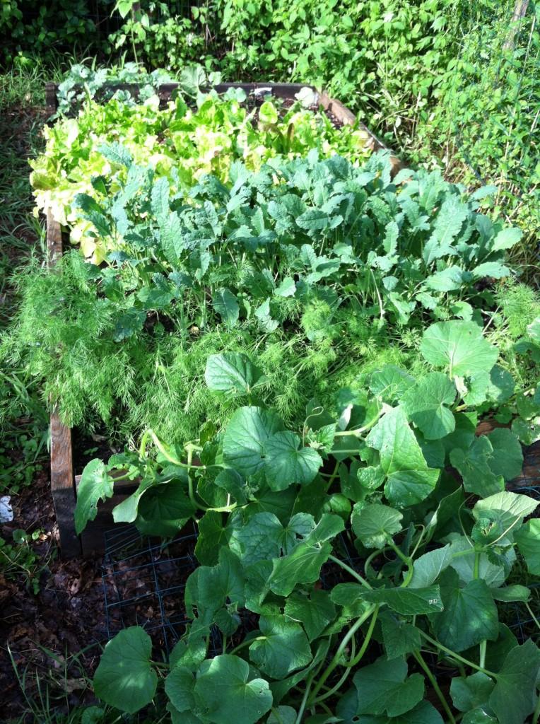 garden6.30.3
