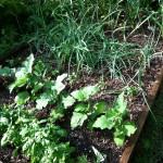 Garden July 2
