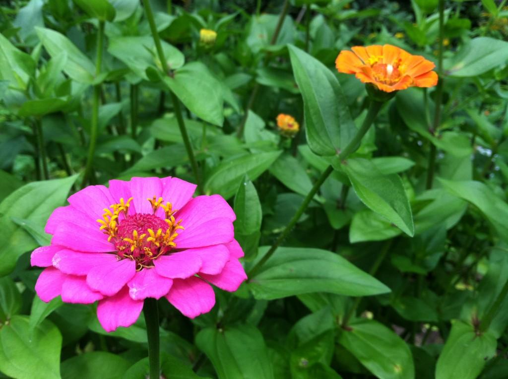 garden8.11