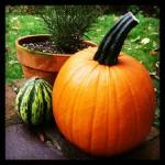 Garden Update: October 2014