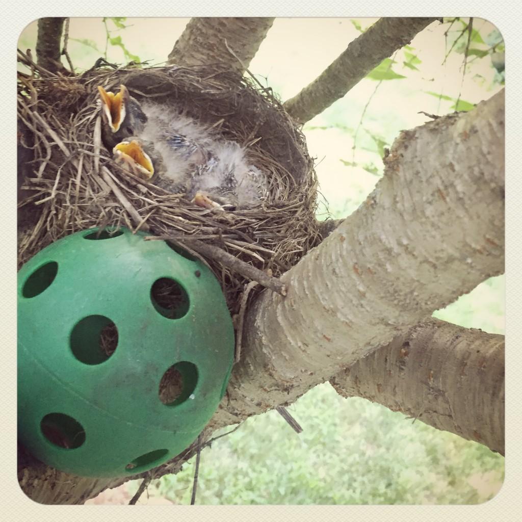 birds nest 4
